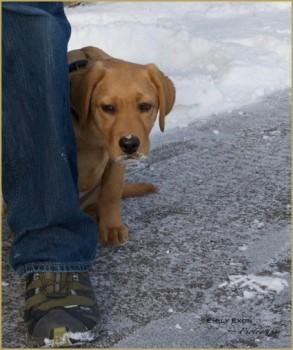 Dog Kennel For Sale Grande Prairie