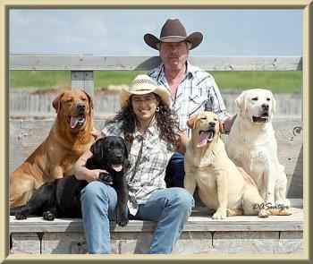 Lab Breeders Alberta| Lab pups Canada | Lab pups AB